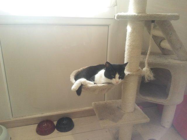 Ouvrir les pics de chatte humide