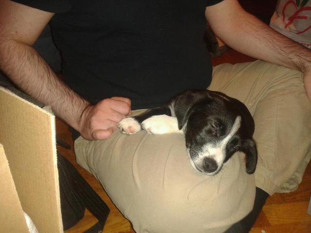 comment apprendre a mon chien a etre propre. Black Bedroom Furniture Sets. Home Design Ideas