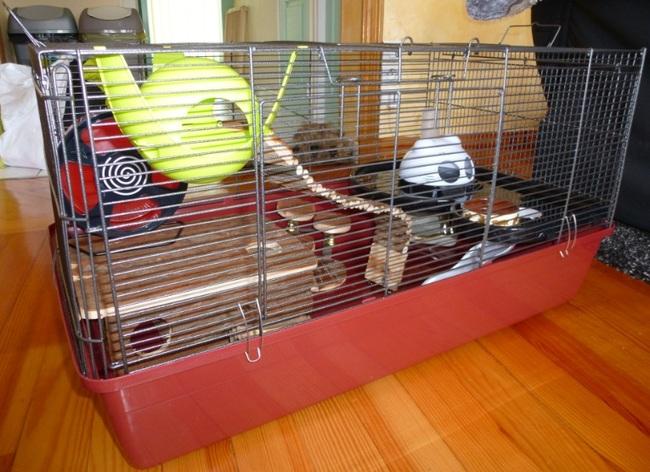 cage assez grande pour un hamster nain forum hamster. Black Bedroom Furniture Sets. Home Design Ideas