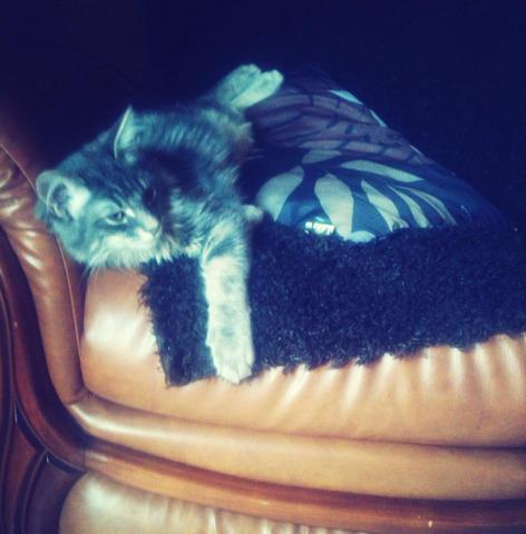 quel est le poids moyen d 39 un chaton de 5 mois question nourrir son chat wamiz. Black Bedroom Furniture Sets. Home Design Ideas
