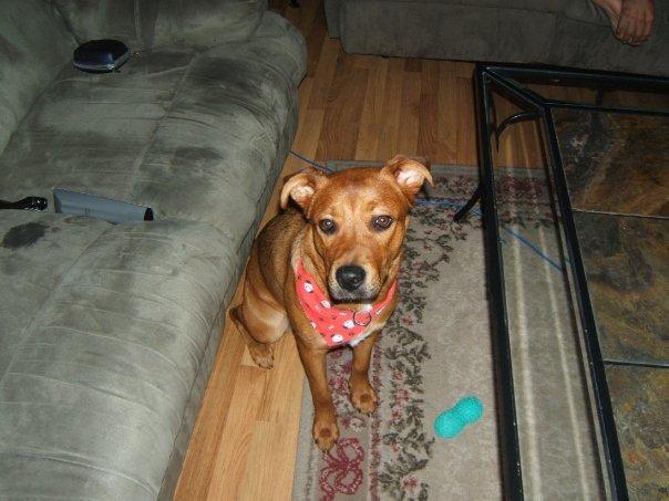 mon chien mort forum eduquer son chien wamiz. Black Bedroom Furniture Sets. Home Design Ideas