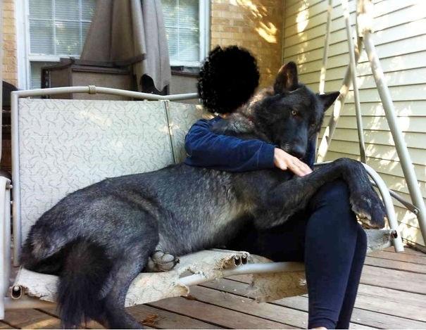 quel est la race de ce chien 2 forum choisir son chien wamiz. Black Bedroom Furniture Sets. Home Design Ideas