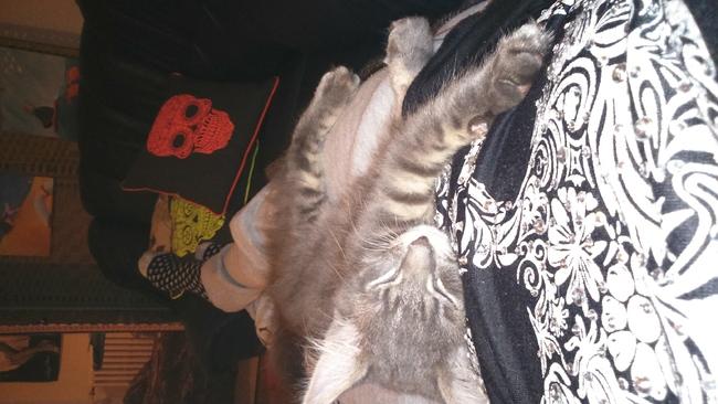 Comment savoir si mon chaton sera mi long forum chats - Coup de foudre comment savoir si c est reciproque ...