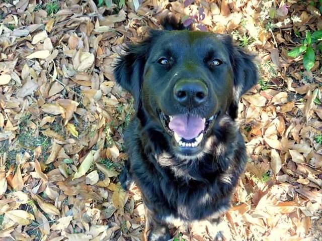 geyna chienne heureux adoptés