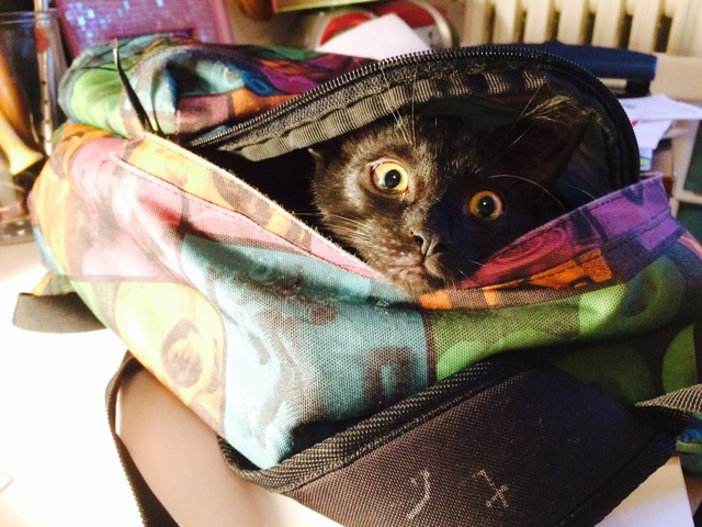 yoda chat heureux adoptés
