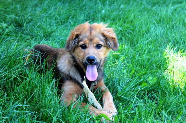 Sam chien heureux adoptés