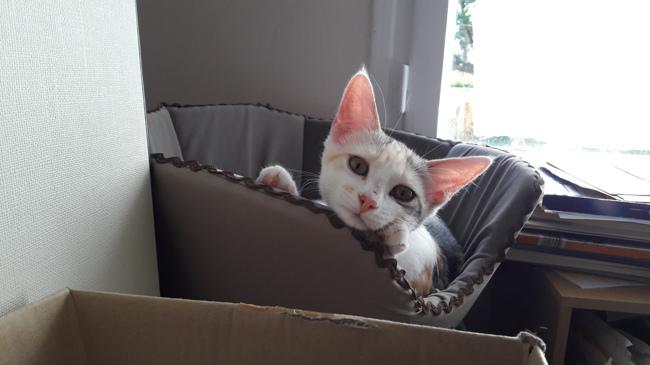 Amaterasu chat heureux adoptés