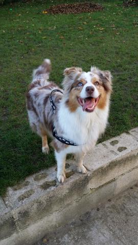 Glen chien heureux adoptés