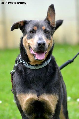 Dove chien heureux adoptés