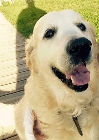 athos chien heureux adoptés