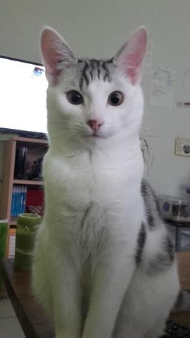 Aloé chat heureux adoptés
