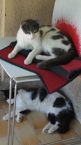 Mojto et Mikado
