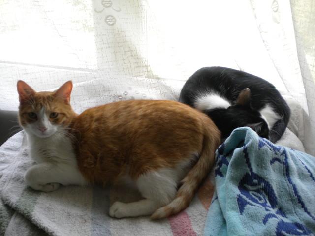 Salem et Mini