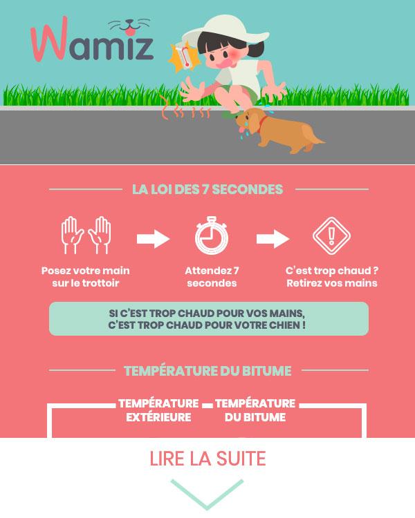 Découvrez l'astuce pour savoir s'il fait trop chaud pour promener votre chien !