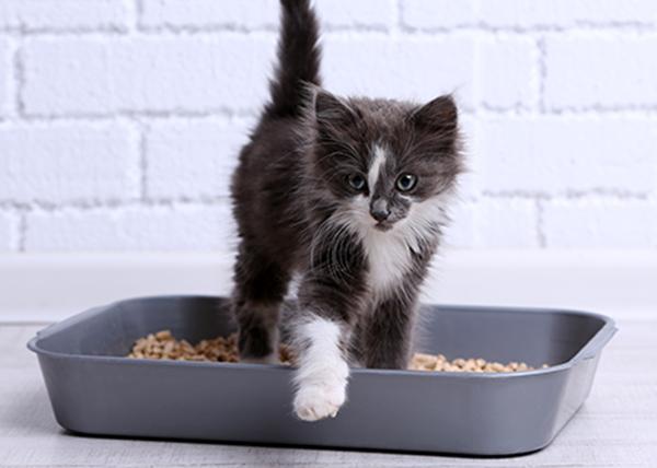 Si le chat n'utilise pas sa litière