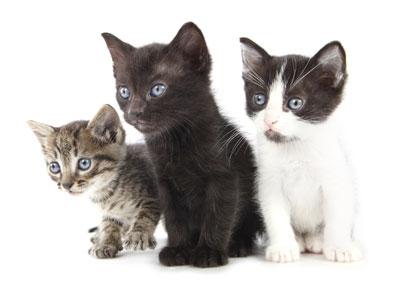 Trouvez le chat qui vous correspond !