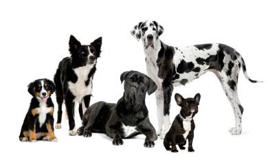Trouvez le chien qui vous correspond !