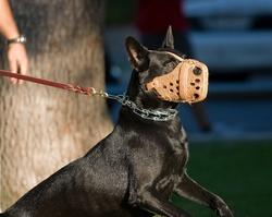 Maitre chien