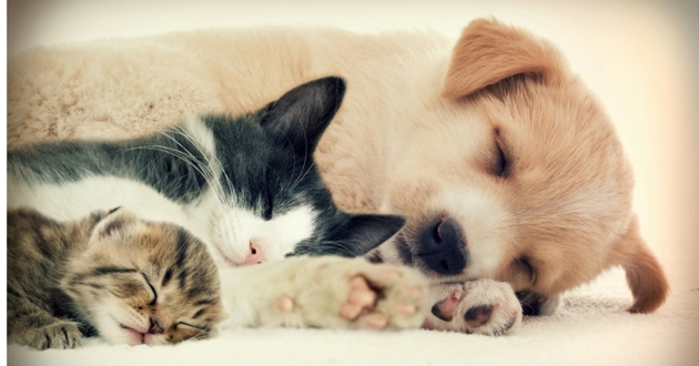 Conseils pour bien choisir son assurance animaux - Image d animaux gratuit ...