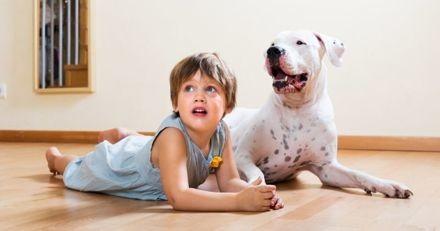 Quelles races de « gros chiens » avoir en appartement ?