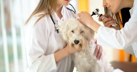 Bulle Bleue, la « mutuelle animale » créée par des vétérinaires