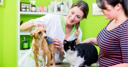 Santé de mon chien ou chat : quel budget à l'année ?