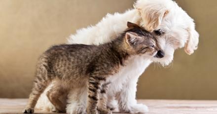 10 bonnes raisons d'assurer son animal chez Bulle Bleue