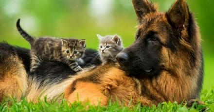 Critères pour que mon chien ou chat soit assuré