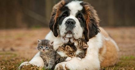 Le prix d'une assurance pour animaux