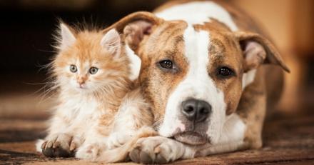 Taux de remboursement d'une assurance pour chien ou chat