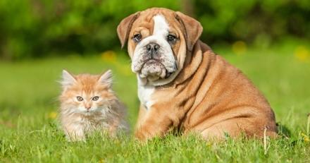 Pourquoi souscrire à une assurance pour chien ou chat : les témoignages