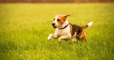 5 moyens de savoir si votre chien est en bonne santé