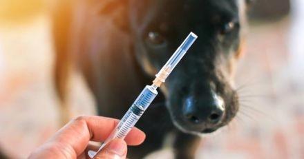 Est-ce important de vacciner son chien ou chat ?