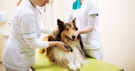 Combien de fois emmener mon chien chez le vétérinaire ?