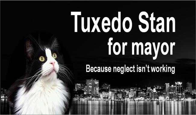 tuxedo stan, un chat candidat aux élections municipales au canada
