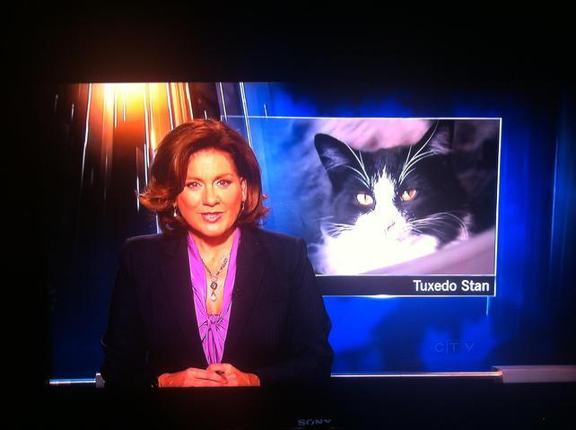 Tuxedo Stan, le chat qui voulait devenir maire