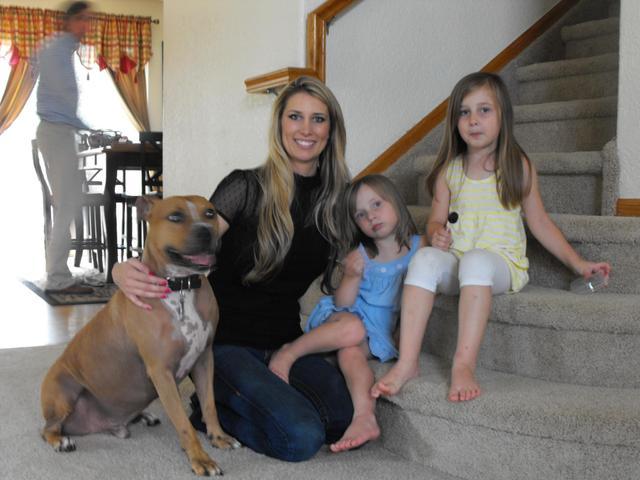 Soutenu par des milliers de personnes, un Pitbull échappe à l'euthanasie