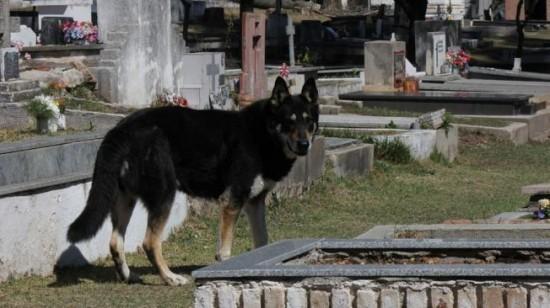 un chien reste près de la tombe de son maître depuis 6 ans