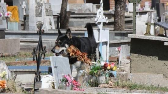Depuis 6 ans, un chien veille près de la tombe de son maître