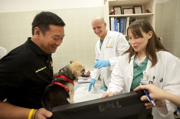chien héros chirurgie