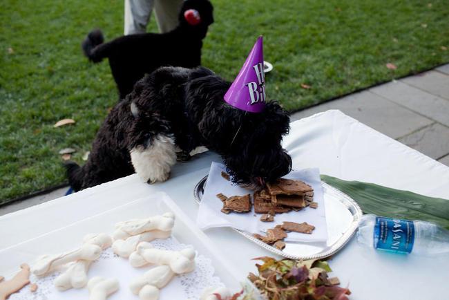 chien barack obama anniversaire