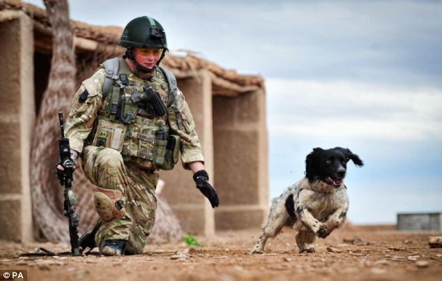 un chien héros renifleur décoré d'une médaille