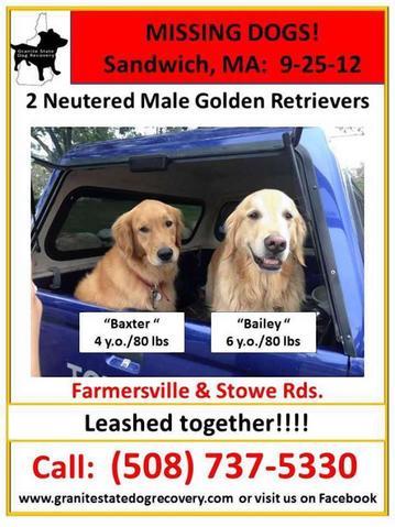 un chien sauve son frère, golden retriever