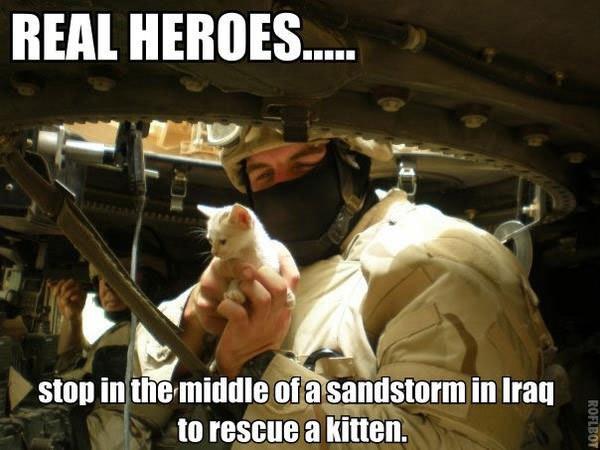 un chaton sauvé par des soldats en irak
