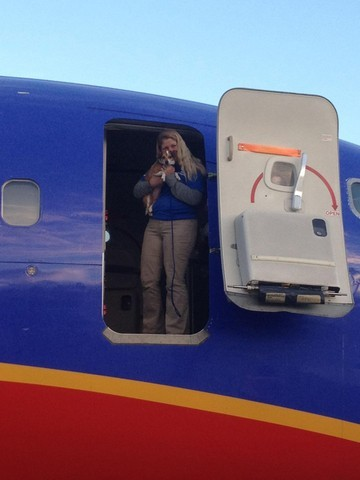 60 chiens et chats victiomes de l'ouragan sandy en route pour une nouvelle vie