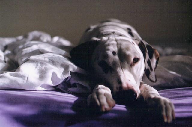 38% des Européens dorment avec leur chien