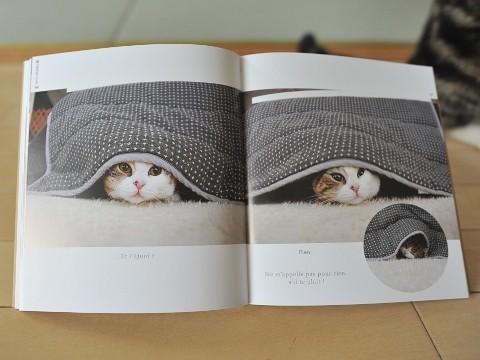 maru chat star du web livre