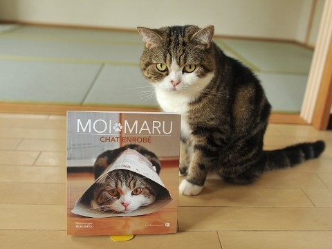 maru chat star du web livre