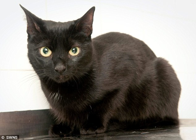Perla, le chat noir qui veille comme un ange sur la vie de sa maîtresse
