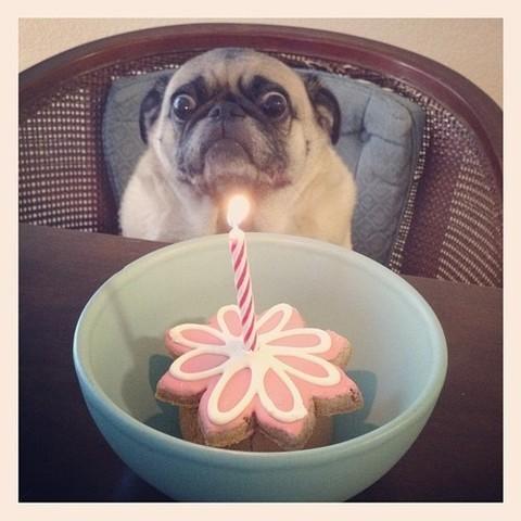 Plus de la moitié des Européens fêtent l'anniversaire de leur chien